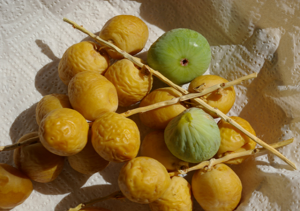 Dattes_figues